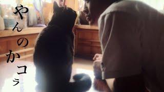 猫は圧力に屈しない Cat vs Human