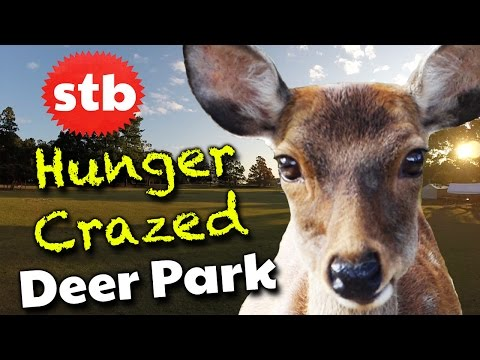 Feeding Japanese Bowing Deer in Nara Park // Things to Do in