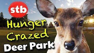 deer in nara park things to do in nara japan visit japanese bowing deer at the deer temple