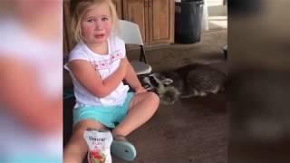СМЕШНЫЕ ДОМАШНИЕ ЖИВОТНЫЕ. Приколы про котов и кошек