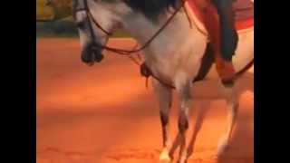 Romans Lil Angel - 4 y/o AQHA Silver Dappled Grey Mare
