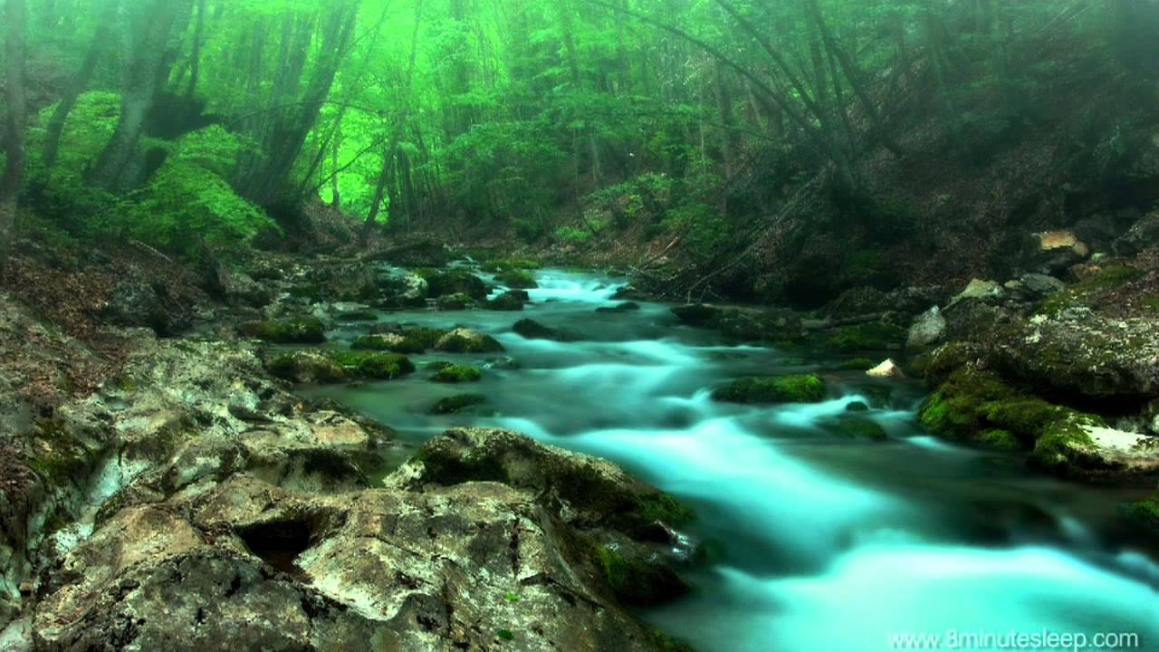 nature forest sounds creek stress relaxation relief sleeping hours scenery