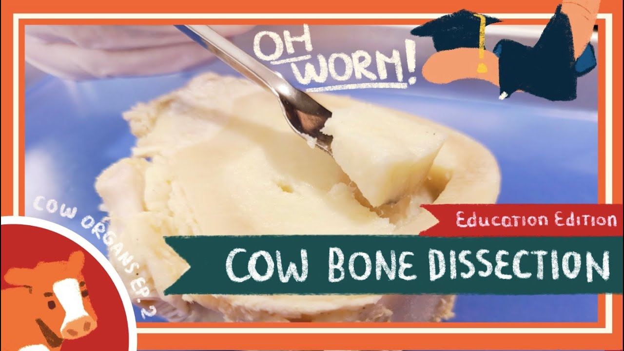Bone Dissection || I Can't Believe It's Not Butter!