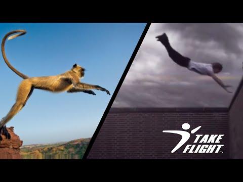 Fur + Sweatpants (Monkeys vs. Traceurs)   An Original Edit by Dan Chalifoux from YouTube · Duration:  2 minutes 27 seconds