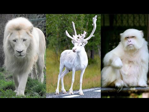 10 Most Beautiful White Animals in the World