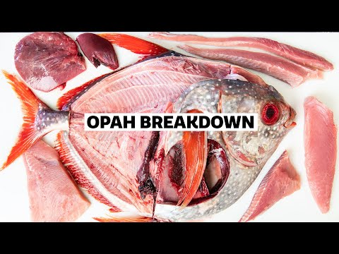 How To Fillet A WHOLE OPAH With Tommy Gomes