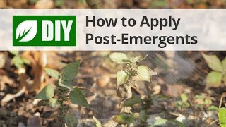 How To Apply Post-Emergent Herbicide Weed Killers