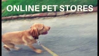 ONLINE PET STORES IN PAKISTAN