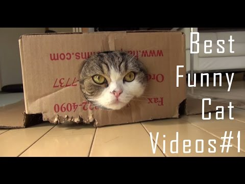 ✔ Funny Cats Compilation 2016 | Best Funny Cat Videos #1 ❤️❤️
