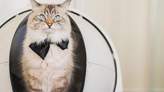 ►ATTN ALL CAT OWNERS: My Honest Litter Robot Review!