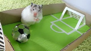 ХОМЯЧКИ ИГРАЮТ В ФУТБОЛ, КТО ПОБЕДИТ?/Three hamsters playing football