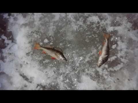 г.Белоярский. Я окуеваю с этих рыбаков.
