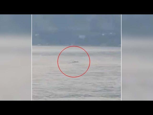 Ogopogo existe: Graban a la misteriosa criatura del lago Okanagan en Canadá