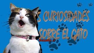 Día internacional del gato. [5 curiosidades sobre los gatos]