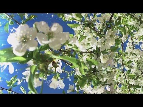 З першим днем весни Прокидайся весна прийшла Гарного весняного дня