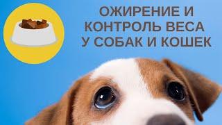 Ожирение и контроль веса у собак и кошек.