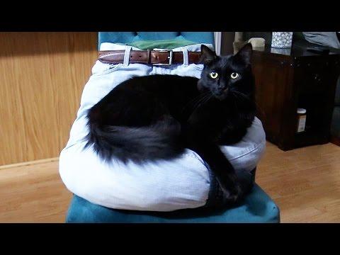 5 Crafts Fur Cat Owners