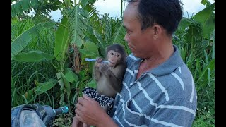 Monkey Doo Is Very Friendly With Daddy's Friend