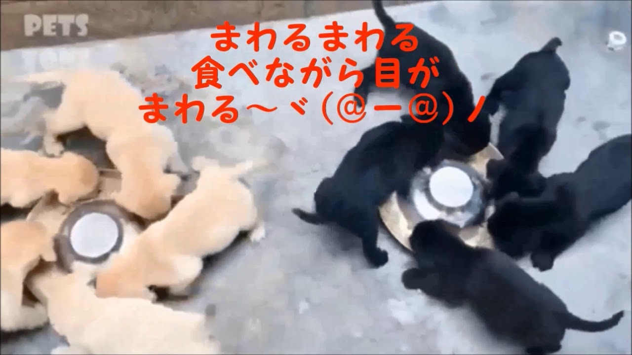 可愛い犬どんくさい犬や子犬のかわいいハプニング動画 毎日のネタ