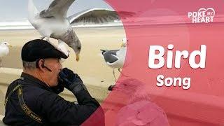 Elderly Man Plays Harmonica to Seagulls on the Beach