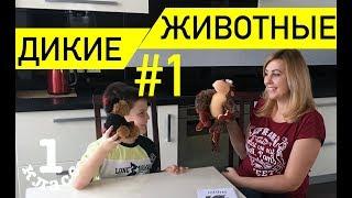 """Тема """"Дикие животные"""" #1 / Английский язык /1 класс"""