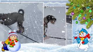 Зимняя прогулка Лотты