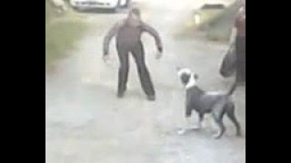 прикол облаял собаку