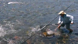 BTS: Netting a 2-foot Montana Brown Trout w/Rooster