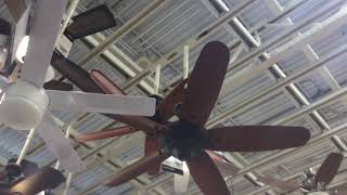 Ceiling fans and Christmas lights at Home Depot