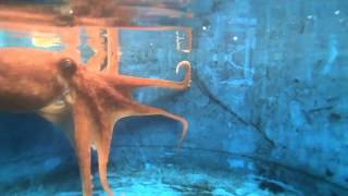 Happy Halloween - Octopus turns White as a Ghost