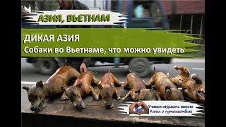 Дикая Азия. Дикие собаки в Нячанге Вьетнам/Wild Asia. Wild dogs in Nha Trang, Vietnam