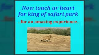 Ambardi safari park dhari A TO Z,LION PARK    TAAJ Group Bhavnagar