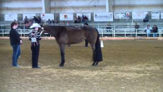 Rocking Horse Classic- Showmanship Showdown