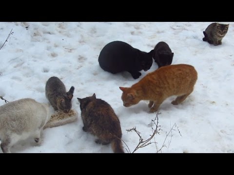Colony of cats with kittens eating food on the snow
