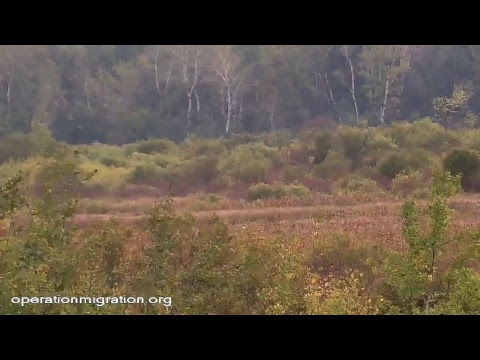 Operation Migration Whooping Crane Stream