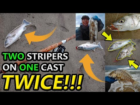 INSANE Monterey Bay Fly Fishing For Striped Bass & BSP!!!