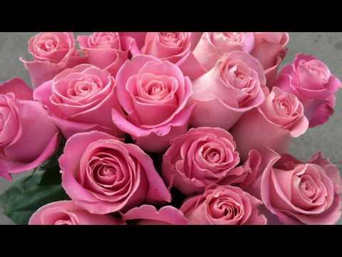 Розовые розы (сорт Hermosa)