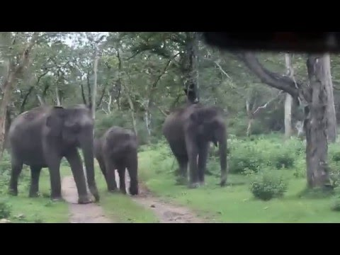 Elephant Attack Bandipur - Part 1 dt.05.Aug.2013
