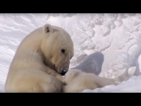 Top 10 amazing animal mothers