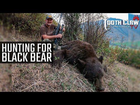 Hunting For Black Bear
