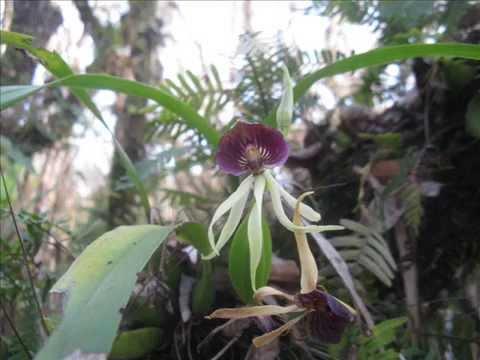 Watch Wild Orchid Online Free | Putlocker