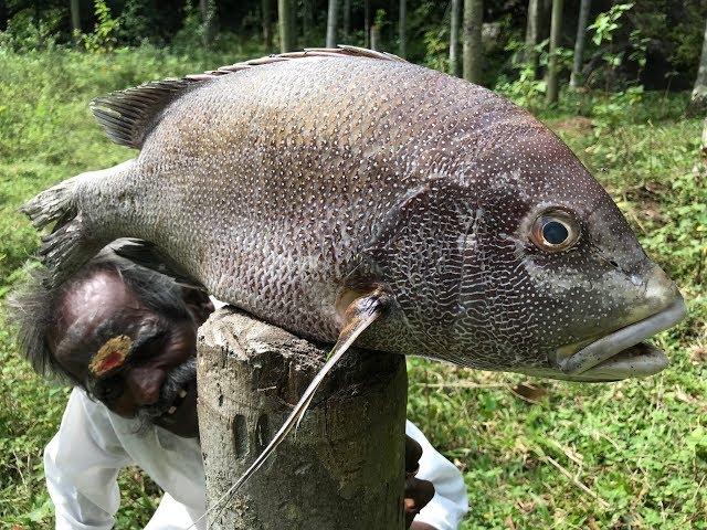 PEARL SPOT FISH fry prepared by my Daddy ARUMUGAM  / BIG Full FISH Fry / Village food factory