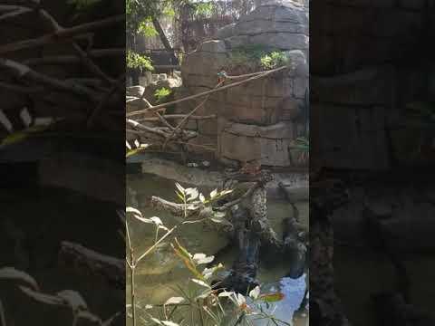 Chafee zoo de fresno