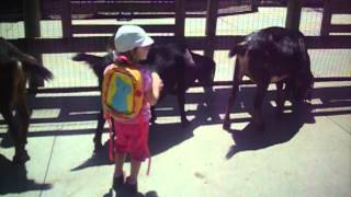 Mala koza czesze duze kozy