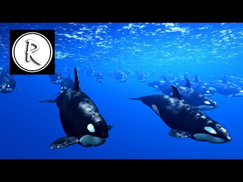 Delta Waves: 9 HOURS Whales + Relaxing Music to Help you Sleep, Deep Sleep, Inner Peace ☯ 2