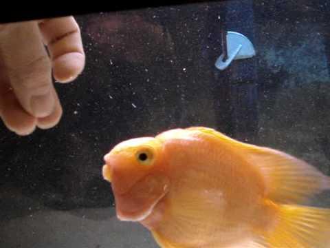 Friendly Parrot Fish
