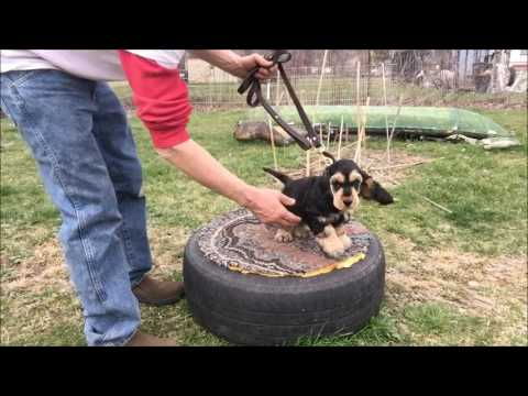 Training A Dog To Sit Without Treats
