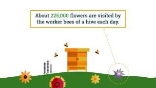BeesMatter.ca - Honey Bee Nutrition