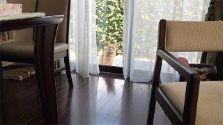 大人しく窓の前で「窓開けてニャ」って感じが伝わってきます。 家に入っ...