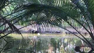 Bang Kachao, un parc convoité - Lauréat du mooc Gobelins